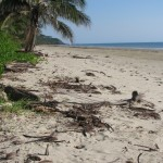Top tips for exploring tropical north Queensland with young kids
